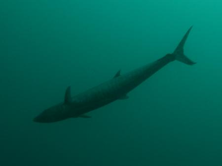 Blue Star Dive & Resort,Philippinen