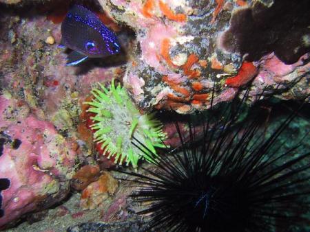 Cita Del Mar Las Galletas Teneriffa,Kanarische Inseln,Spanien