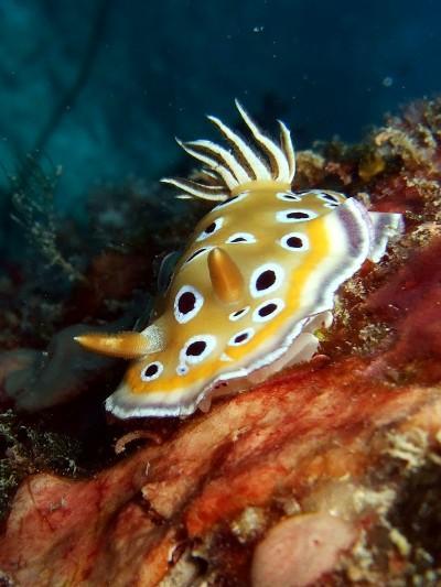Dive Seychelles,Beau Vallon Bay (ex Island Ventures),Seychellen
