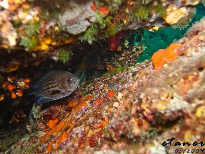 Getaucht mit divingCres.....empfehlentswert :-), Insel Cres,Kroatien
