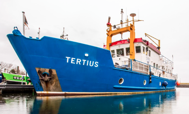 Tertius, Niederlande