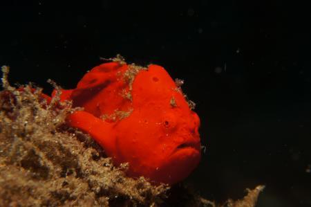 Maluku Divers,Ambon,Allgemein,Indonesien
