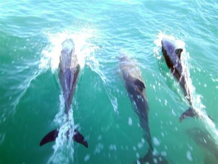 Sharkexplorers,Simonstown,Südafrika,shark