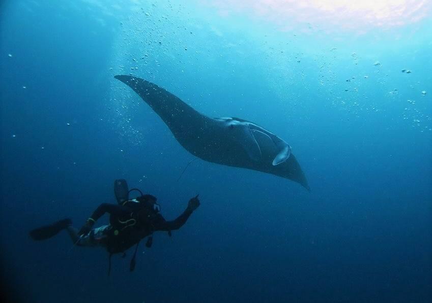 Mnata off Atoll, Maldives, Emperor Atoll, Malediven