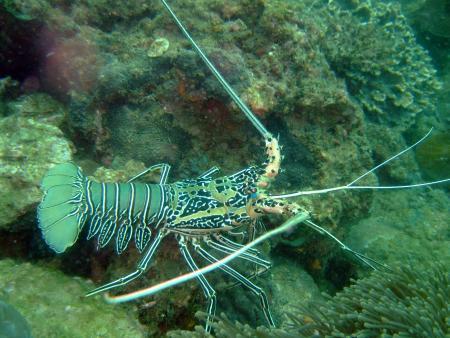 Poseidon Dive Center,Krabi / Ao Nang,Andamanensee,Thailand