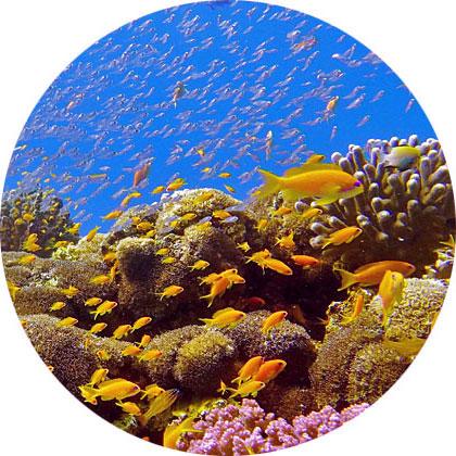 Korallenriff, Shulamit's Eilat Diving Adventures, Israel