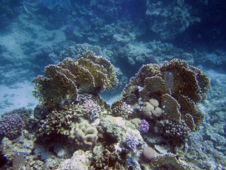 Oriental Divers,Sentido Resort,El Quseir bis Port Ghalib,Ägypten