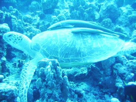 Calypso Divers - Port Ghalib,El Quseir bis Port Ghalib,Ägypten