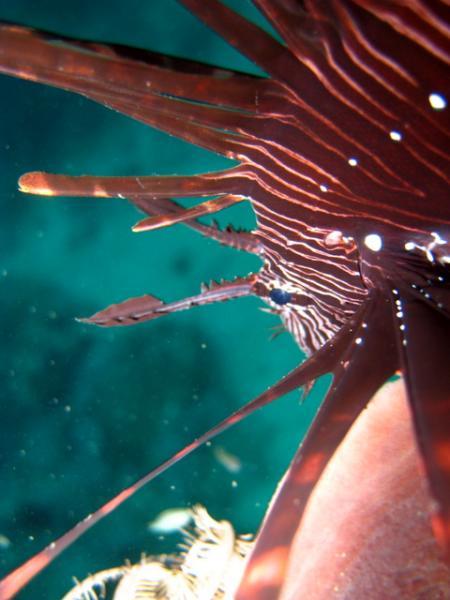 Q-Dive,Padangbai,Bali,Indonesien