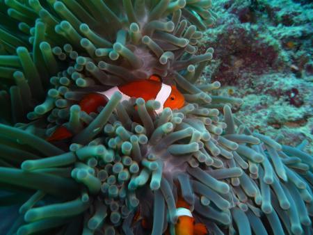 Dream Divers Gili Air,Allgemein,Indonesien