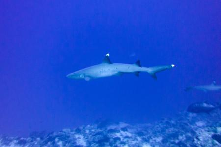 Ed Robinson´s Diving Adventures,Kihei/Maui,Hawaii,USA