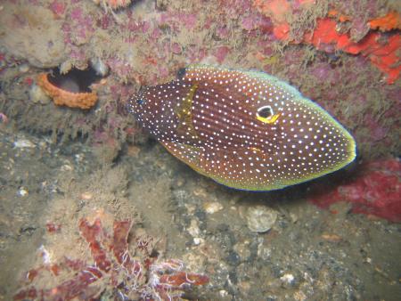 Divers Lodge Lembeh,Sulawesi,Indonesien