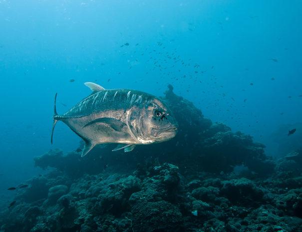 Ceningan Divers, Nusa Ceningan, Indonesien, Bali
