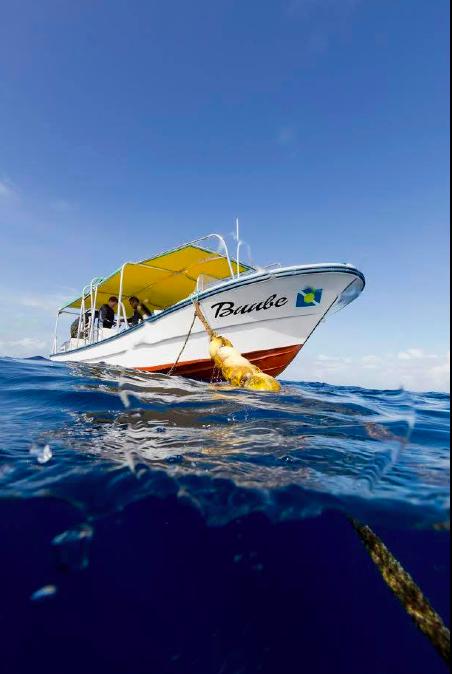 Tauchboot, Palau Dive Adventures, Palau