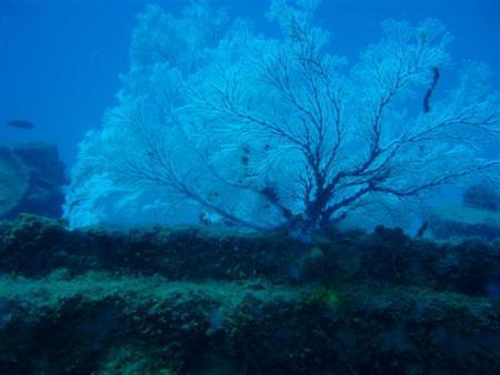 Mahe,Beau Vallon,Twin Barges,Seychellen