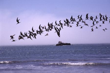 Playa Mendieta,Paracas - Nördliche Felsnadeln,Paracas - Zentralinseln,Paracas - Seelöweninsel,Peru
