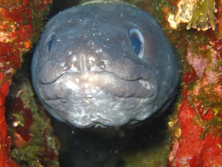 Agramsub Cres,Triton-Diving,Martinscica,Cres,Kroatien