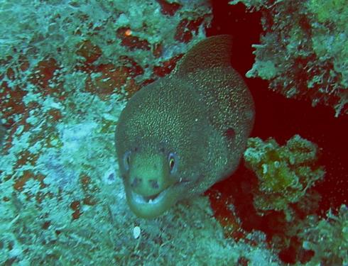 Grand Mal, Marine Park, Grand Mal,Marine Park,Grenada