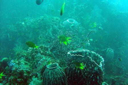 Habitat – H2O,Bali,Indonesien