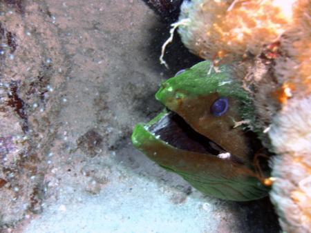 Discover Diving Lagun,Curaçao,Niederländische Antillen