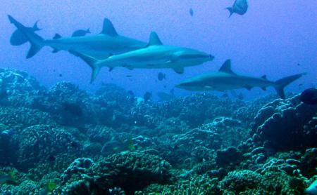 Moorea und Fakarava,Französisch-Polynesien