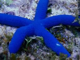 Blue Star Dive & Resort,Philippinen