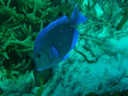 Tropical Divers Bonaire,Bonaire,Niederländische Antillen