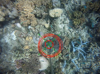 COTSbot targets and identifies the crown-of-thorns starfish on its own - © QUT Media