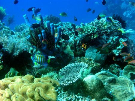 Dive Timor Lorosae,Dili,Osttimor