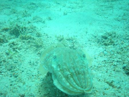 Liamis Dive Center,Kos,Griechenland
