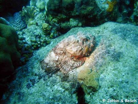 Bon Bini Divers,Kralendijk,Bonaire,Niederländische Antillen