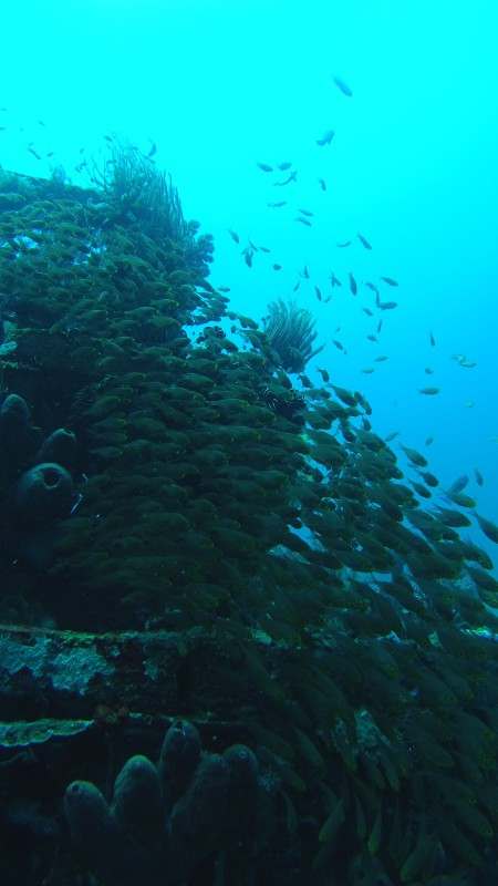 diving.DE Candidasa,Candi Beach,Bali,Indonesien