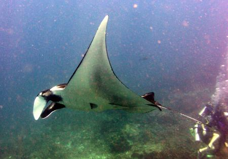 Eden Divers Phuket,Patong,Andamanensee,Thailand