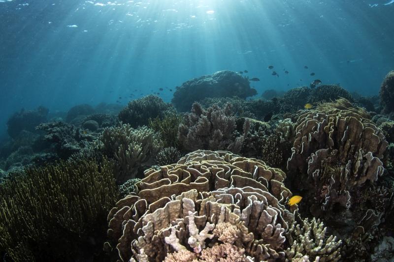 Riff Szene im Flachwasser, Uber Scuba Komodo Dive Center, Indonesien, Allgemein