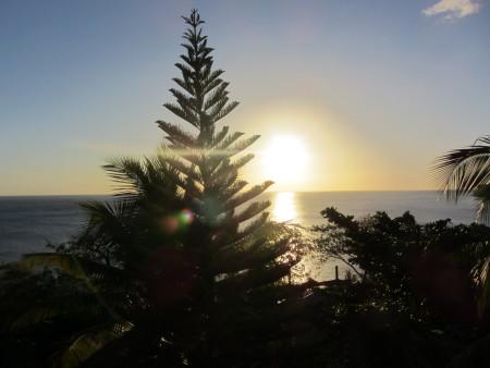 Tamarind Tree Hotel,Dominica
