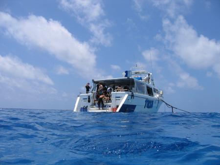 Tusa Dive,Cairns,Australien
