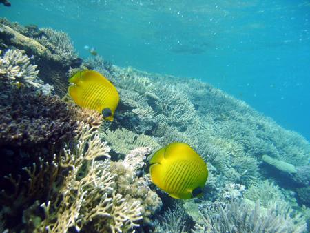 Dolphin Reef,Hurghada,Ägypten
