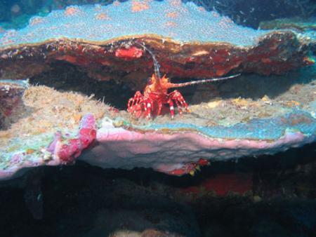 promarine,Punta Cana,Dominikanische Republik