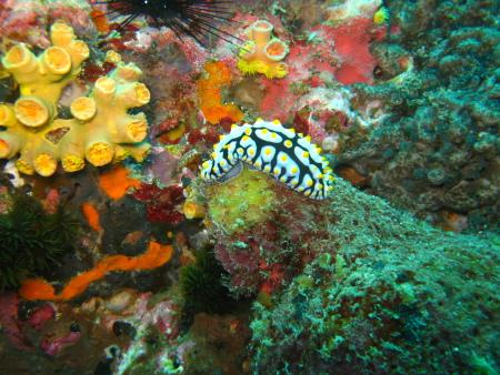 Member Diving,Koh Samui,Golf von Thailand,Thailand