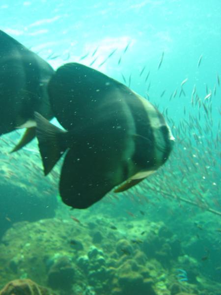 Dive And Relax,Koh Lanta,Andamanensee,Thailand