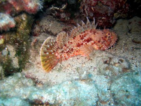 Croatia Divers,Vela Luka,Insel Korcula,Kroatien