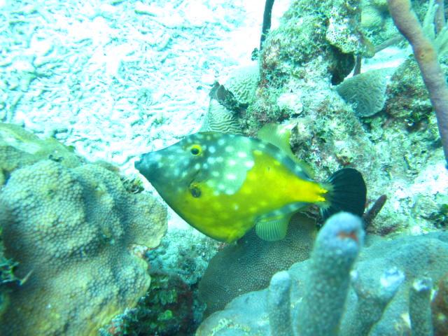 ???, Reef Oasis Viva Dominican, Bayahibe, Dominikanische Republik