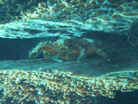 Scuba Steve´s Diving,St. Lucia
