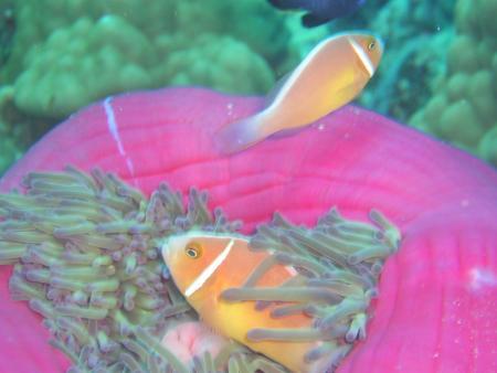 Reef Encounter Cairns,Australien