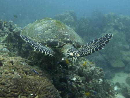 Seashell Dive Center,Koh Tao,Golf von Thailand,Thailand