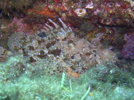 Enfola Diving (Elba),Italien