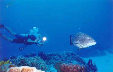 Pro Dive Mexico,Allegro & Grand Occidental,Cozumel,Mexiko
