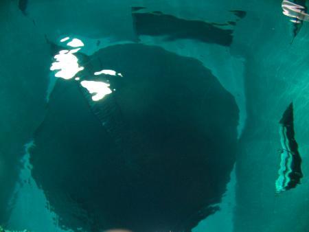 Nemo 33,Indoor-Tauchzentrum,Brüssel,Belgien
