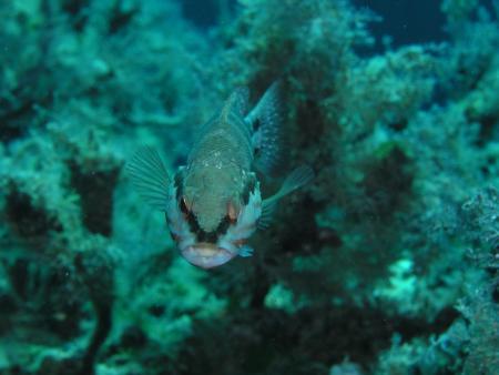 Phoenix Dive Club,Kreta,Griechenland