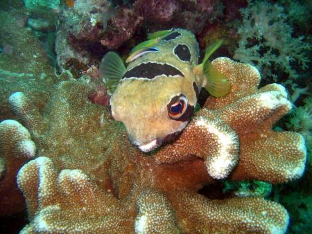 Coco Divers Philippinen,Philippinen